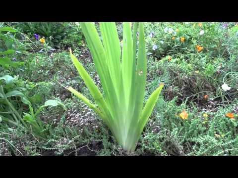 Что выросло из китайских семян орхидеи!