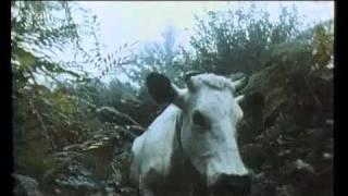 Trailer de Vacas (Julio Medem, 1992)