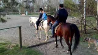 SKJ k. Lesiowa - wybieg i koniki