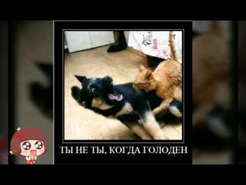 Картинки Я Люблю Тебя! -