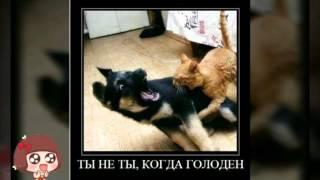 АлисаZoi.Самые смешные котята.Картинки смешных котят.