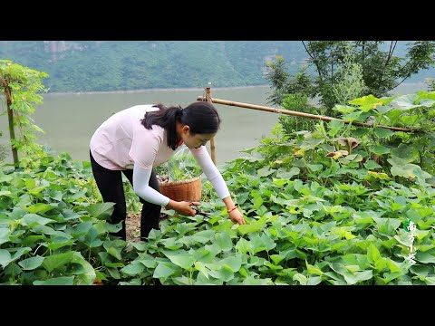 I live alone in the mountains and grow vegetables. Today I m going downhill from YouTube · Duration:  4 minutes 27 seconds