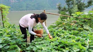 【南方小蓉】我獨居深山懸崖自耕自種 一年來種了漫山的蔬菜,吃不完背下山被搶購一空