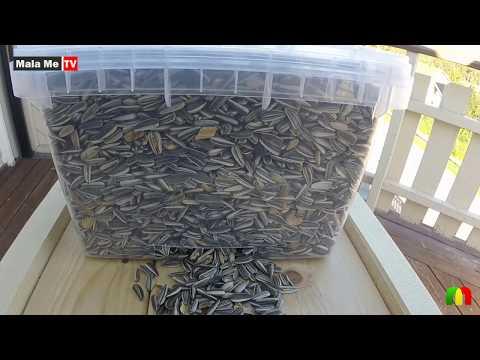 How Make Bird Feeder DIY Bird Feeder