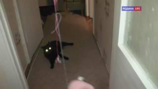 Черный кот. Светящиеся глаза