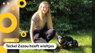 Baasje Kahlan heeft de leukste hond van Nederland