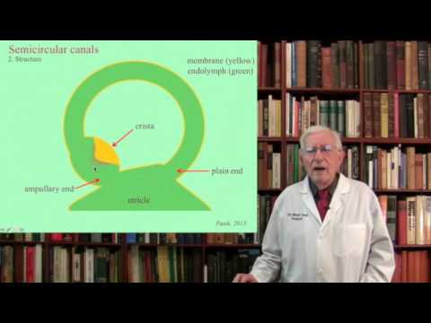 Lecture 3.  The Vestibular System  Structure, Function and Dysfunction