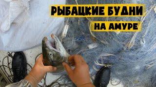 Рыбалка на сети на Амуре Добыча и выживание Суровые будни рыбака