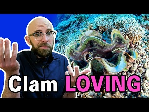 How Do Clams Reproduce?