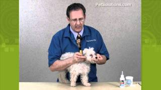 Petsolutions: Remove Tear Stains From Your Dog