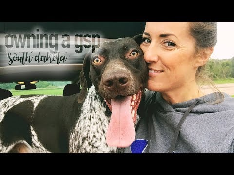 Managing the Energy of 2 German Shorthaired Pointers