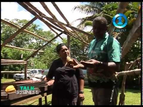 COCOA FARMING  - TAILEVU FIJI