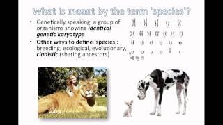 Species and Speciation (IB Biology)