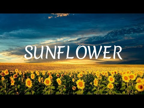 Sunflower - Jean-Philippe Ichard