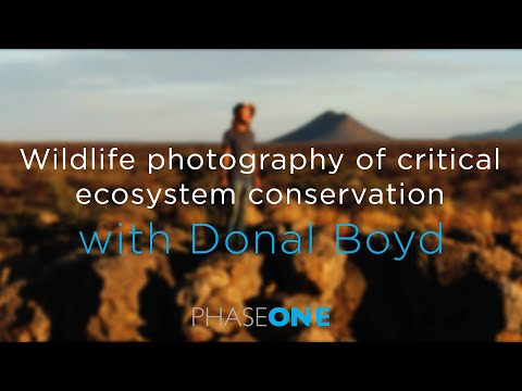 Wildlife photography of critical ecosystem conservation with Donal Boyd | Phase One