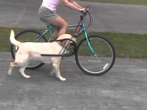 Running Guard Dog Bike Exercise Attachment Youtube
