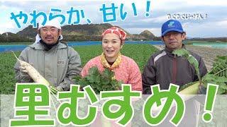 青首大根「里むすめ」を収穫して丸かじり 徳島県鳴門市里浦町