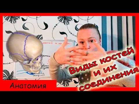 Урок биологии №49. Виды костей и их соединения.