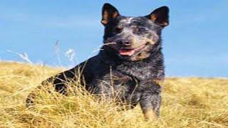 Самая старая собака в мире. Собака долгожитель прожила 29 лет 5 месяцев