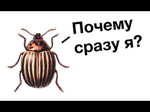 Русская фантастика. Попаданцы. Донбасс. Обзор на книгу «Позывной