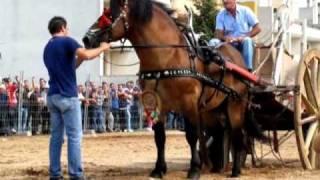 Noha IX Fiera dei Cavalli  Madonna delle Grazie  I cavalli da lavoro