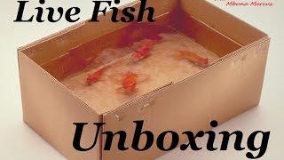 Unboxing Beautiful New Aquarium Fish