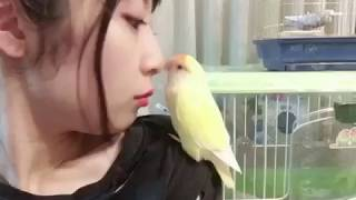【関連記事】 SKE48高柳明音「あれ?こんなとこにもウンチが…」インコ愛...