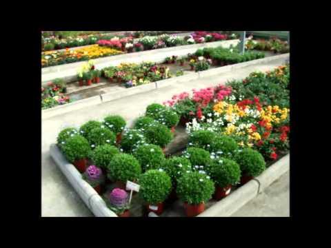 Un paseo por el vivero los rosales los barrios c diz - Garden center valladolid ...