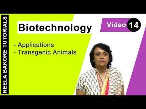 Biotechnology - Transgenic Animals