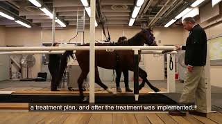 Purdue College of Veterinary Medicine treats show pony for equine asthma
