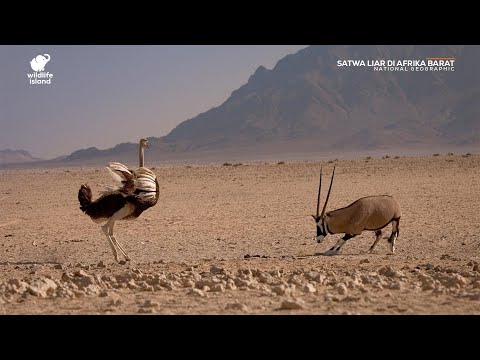 Satwa Liar di Afrika Barat (Documentary) - National Geographic