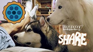 My Dogs Beg For Pie | Try Not To Laugh