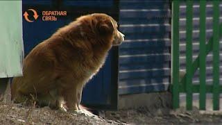 Куда можно обратиться по поводу бродячих собак в Черногорске?