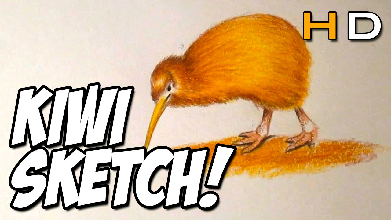 How To Draw A Kiwi Bird With Colored Pencil Step By Step Timelapse