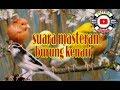 Suara Masteran Burung Kenari Untuk Kenari Baru Belajar Bunyi Lengkap(.mp3 .mp4) Mp3 - Mp4 Download
