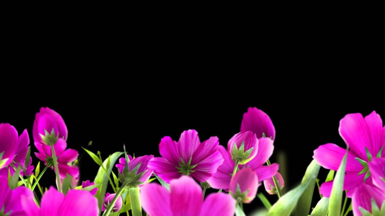 Цветы футаж