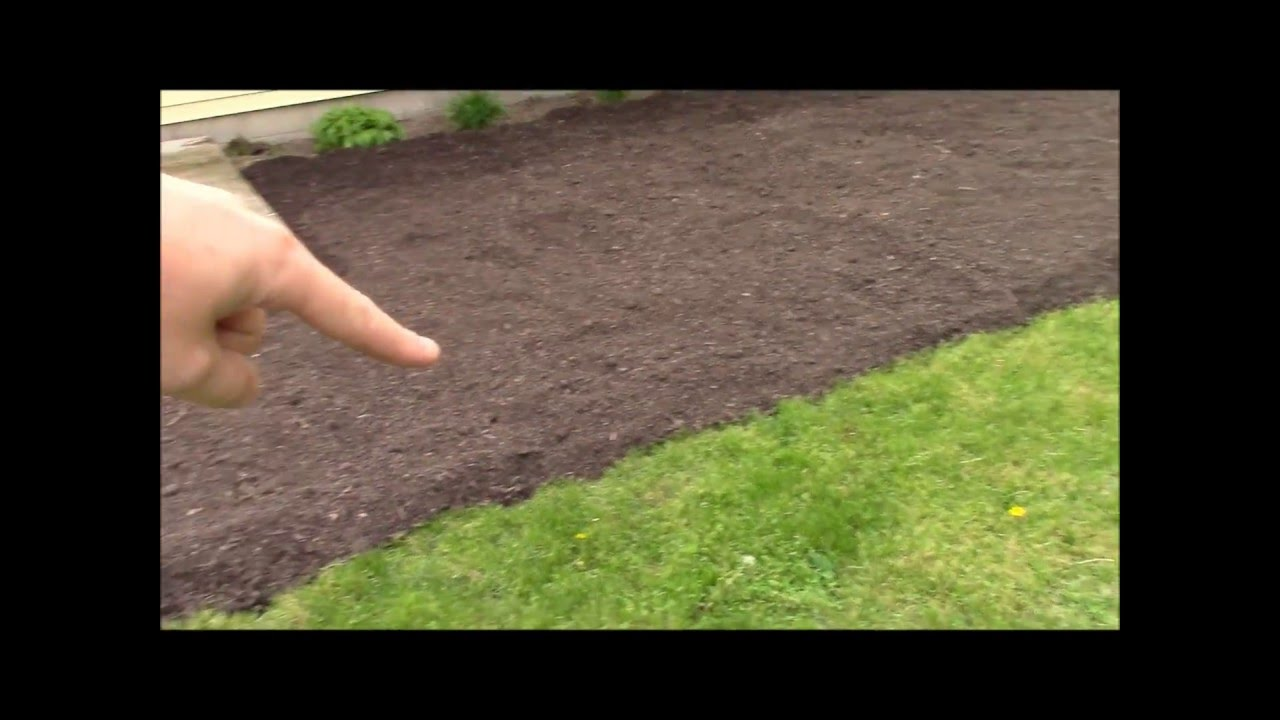 Transforming My Front Yard Into Edible Landscape Part 1