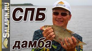 Рыбалка с фидером на дамбе Финского залива [salapinru]