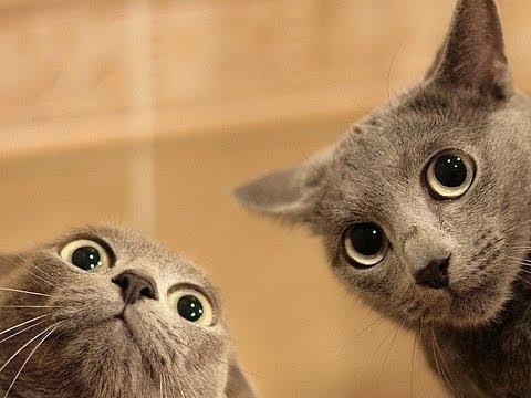 Добрые смешные коты