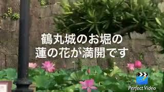得もいわれぬ高貴な香り〜鶴丸城の夏の朝 thumbnail