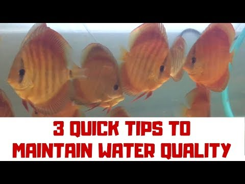 3 Quick Tips To Maintain Your Water Quality - Discus Fish