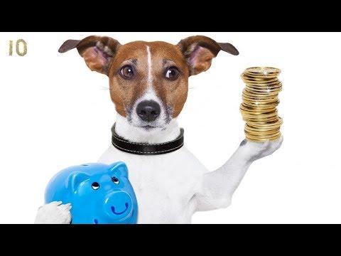 Лучший Друг за Копейки! Топ 10 Самые Дешевые Породы Собак Бульдог Папильон Пекинес Колли Лабрадор