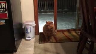 Feral / abandoned cat comes inside for the first time