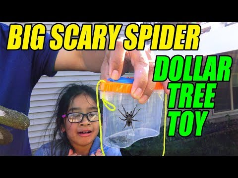 Catching A Big Scary Creepy Spider With Our Filipino  Dollar Tree Toy Disney Car Toys Review