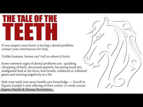 Equine Dental - TheTale of the Teeth