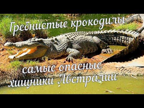Гребнистые крокодилы - самые опасные хищники Австралии