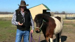 The chestnuts on a Horse and how to use them !  stall13.com videos