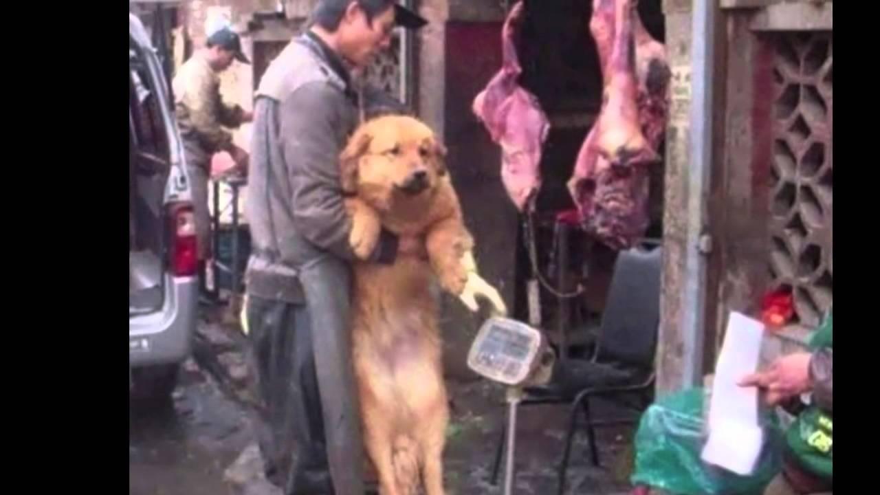 Yulin Dog Festival Video