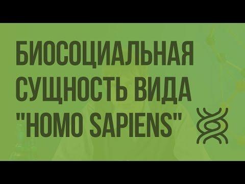 """Биосоциальная сущность вида """"Homo Sapiens"""". Видеоурок по биологии 9 класс"""