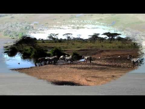 Predicting zebra migrations from space